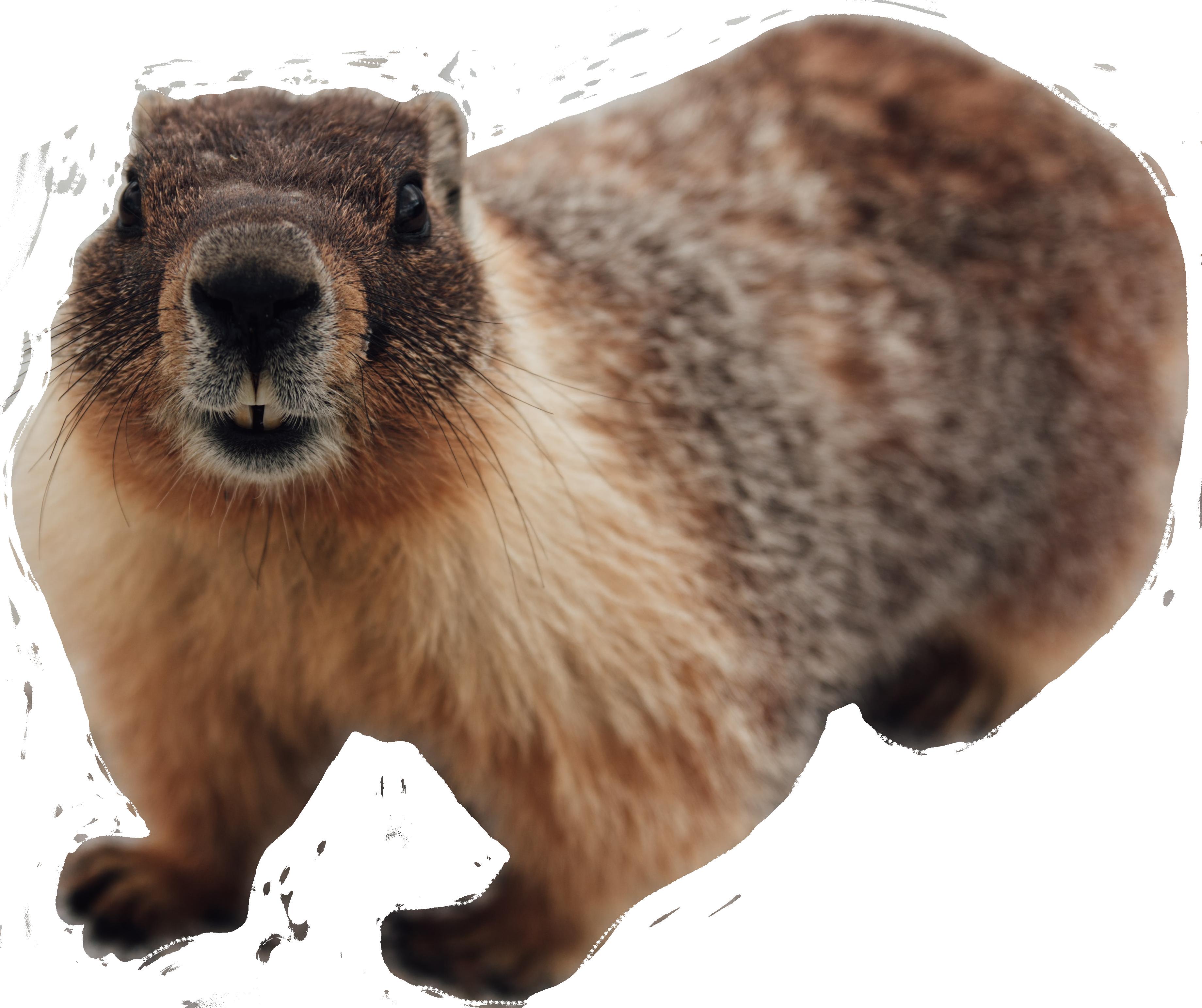 Marmot Cam
