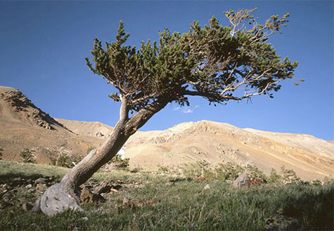 Tree ring dating archaeology news 4