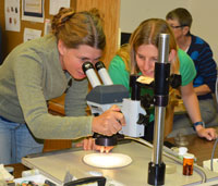 Interns Learn Archaeobotany